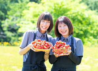 苺を作っている<br>加賀フルーツランドさん